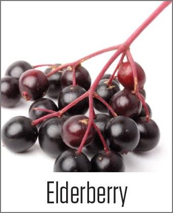 Elderberry picture